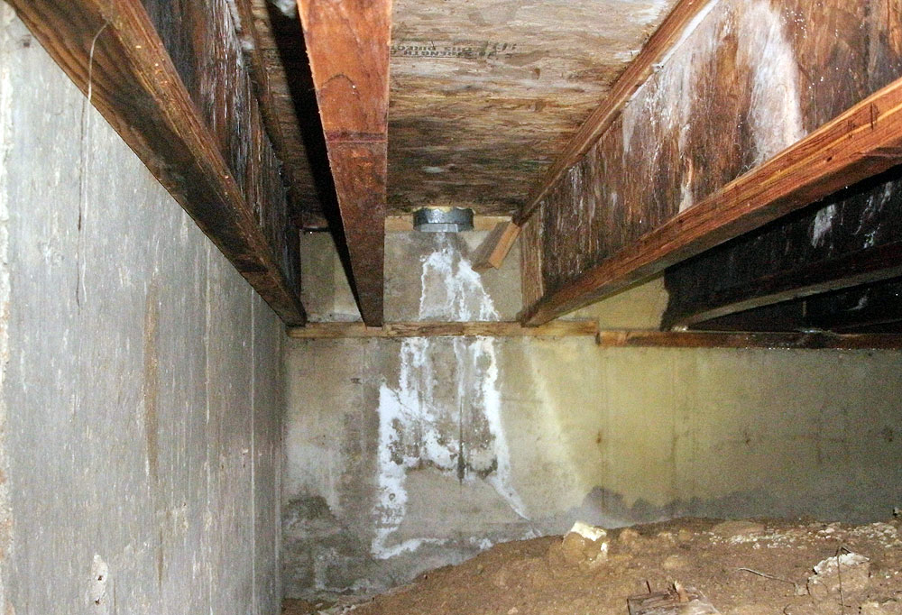 Mold Testing Amp Removal Denver Mold Remediation